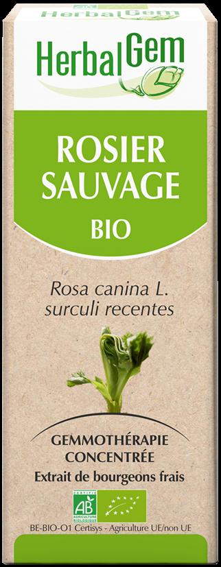 Rosier Sauvage - Macérat Concentré De Bourgeons Bio 50Ml